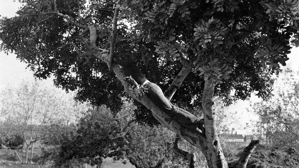 """Fina Miralles """"El árbol. El árbol y el hombre. Encima del árbol"""""""
