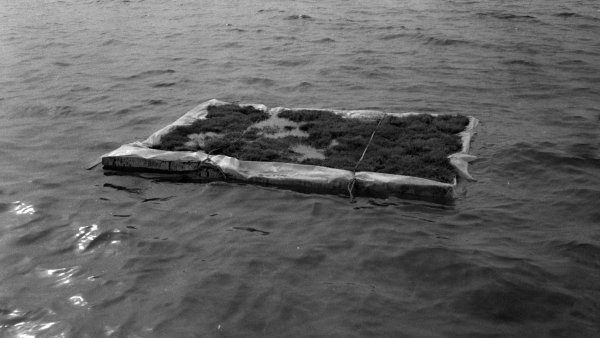 "Fina Miralles ""Transalciones. Hierba flotando en el mar"". Premià de Mar"