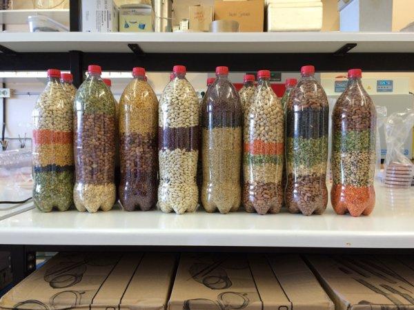 Imagen de la presentación final del grano y la legumbre. Foto: Silvia Noguer