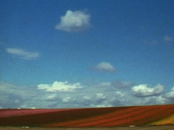 What do Martha Rosler's flower fields hide?