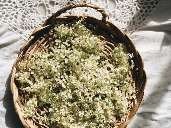 Refresco de saúco. Flores de alta cocina, low cost