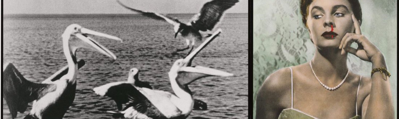 "John Baldessari ""Pelicans Staring at Woman with Nose Bleeding"", 1984"
