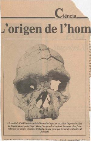 [Un retall de premsa il·lustrat amb un crani d'un homínid]