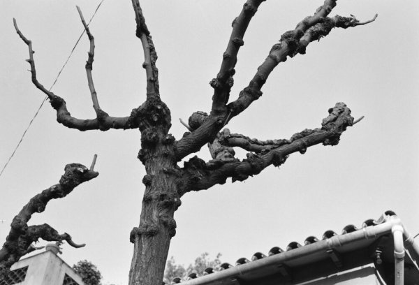 L'arbre. L'arbre i altres elements naturals. Fang a les branques