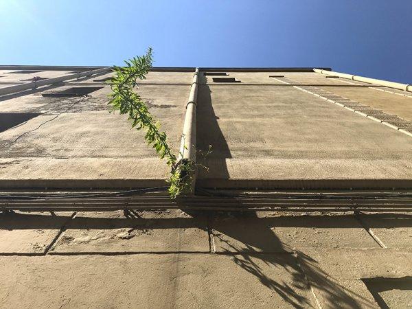 Botanografías callejeras
