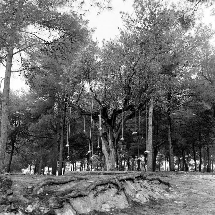 El árbol. El árbol y otros elementos naturales. Frutos de piedra