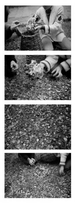 Translaciones. Suelta de caracoles. Barcelona