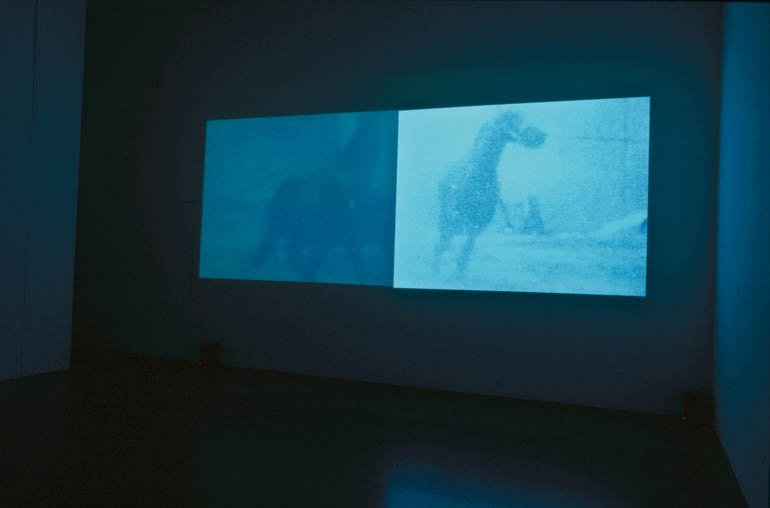 "Malcolm Le Grice ""Berlin Horse"", 1970 (fotograma)"